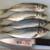 【初心者向け】自分で釣ったら自分で料理を!大阪湾で釣った魚を美味しく食べてみよう