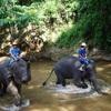 タイ、ミャンマー旅行 DAY2*チェンマイ メーサーエレファント キャンプ