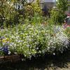 5月のミックスフラワー花壇