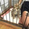 仔犬生活 3日目・・畳のオシッコと、新しいお家