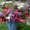 毎日がフラワーアレンジメント(21花卉)