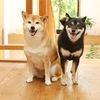 東京23区内で「ペット可」の賃貸物件を調べてみると衝撃的な事実がわかった(泣)