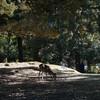 奈良公園の春日大社から東大寺、大仏池の紅葉
