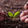 家庭菜園で土を触ってストレス解消する