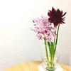 ダリアの花☆