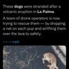 10月20日 噴火と犬とリバウンド