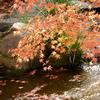【kogasanaの写真素材集】小川のせせらぎと紅葉