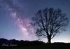 孤樹と天の川