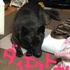 甲斐犬の適正体重とはこれいかに⁇イカ、食べチャイカナイゾ❗️ポリポリ(๑•॒̀ ູ॒•́๑)ポリポリ❓