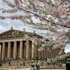 ナッシュビルのCentennial Parkに満開の桜を見に行く。ワシントンDC以外にも桜が一杯咲いていて、びっくりしました。