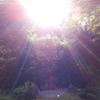 奈良・2Days♪♪♪ 1日目:吉野山~その後に起こった不思議な連なり