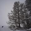 大きな樹と 大きな犬
