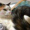 シッポで語る猫