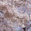 【営業メール】桜の季節に使える♪コピーしてすぐ使えるよ♪