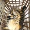 【猫と洗濯カゴ】箱もイイけどカゴもイイね。太陽光ガンガンだと写真が難しい件。