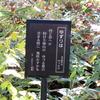 万葉歌碑を訪ねて(その828、829)―高岡市伏木一宮 高岡市万葉歴史館四季の庭(1,2)―万葉集 巻十四 三五七二、巻十八 四一一四