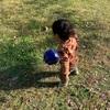 次男1歳サッカー