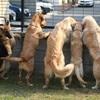 保護犬の一時保護活動で思うこと