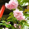 酒造りの街・伏見にある朱色と桜がきれいな穴場!?桜スポット