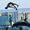 夏休みの旅行に新江ノ島水族館に行って来ました! 7月旅行編!(新江ノ島水族館)