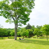 【平瀬緑地公園】で愛犬とピクニック!超穴場だよ💛