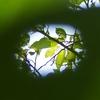 虫食い穴から空を覗いてみた