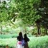 キヤノンEOS630でお写んぽ(旧古河庭園庭園編)