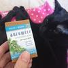 今日の黒猫モモ&白黒猫ナナの動画916