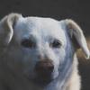 犬の副腎皮質機能亢進症(クッシング症候群)ー症状は分かりやすい。原因と治療法を解説します。