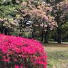 千鳥ヶ淵と北の丸公園観察日記(2017/4/18)