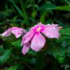 【撮影記録】都内の公園で雨上がりの花々を撮影してきた|新宿区戸山公園