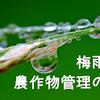 梅雨時期の農作物の管理に注意しましょう!