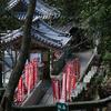 原始の森を体験しよう。犬鳴山七宝瀧寺へ行ってきた
