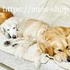 犬猫話:ゴールデン・レトリバーの寝姿セレクション