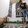 イラクで国内初の猫専用ホテルがオープン!グルーミングやその他ケアまで込みで至れり尽くせり!!