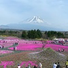今が見頃  富士芝桜まつり2019  100%楽しむための見どころガイド!