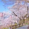 牧野公園で花見!「日本の桜百選」は伊達じゃない。手ぶらで行っても楽しめる充実の設備がすばらしい!