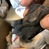 家でできる趣味生活 化石クリーニングに挑戦した結果、何これ?という物体が出てきた
