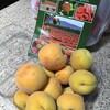 Apricot King