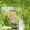 ワイルドフラワーガーデン「ブルーボネット」で花と緑を楽しむ