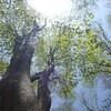 東雨乞岳から御在所 初夏の新緑回廊を行く 2012.05.13