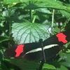 カナダのオススメ観光スポット!ナイアガラパークス蝶園(Butterfly Conservatory)を紹介