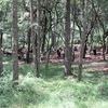 5年生:林間学習2日目⑧ 沢遊び