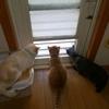 猫たちの権力争い勃発