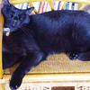今日の黒猫モモ&白黒猫ナナの動画はお休みニャ~♪