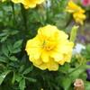 雨の日のお花とバッタくん