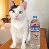 世界水の日(World Water Day)、水に思いを馳せまして。