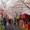桜祭りと、本日の奥出雲トロッコ号。前編。