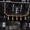 雨でも素敵に撮る。桜の風情を醸し出すのは靄(もや)の力。2017京都吉峯寺の桜は見頃を迎えています。
