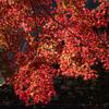 名所「香嵐渓」で撮った終わりかけの紅葉写真を撮って出しで